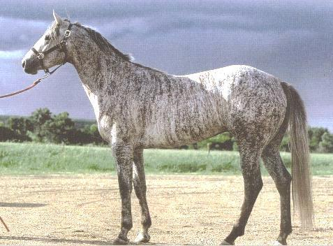 Brindle Horses/Not a Breed but Rather Color Markings