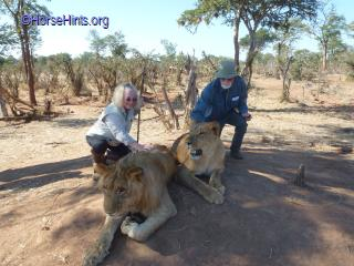 Walking with the Lions/Zimbabwe/Bill and Deb
